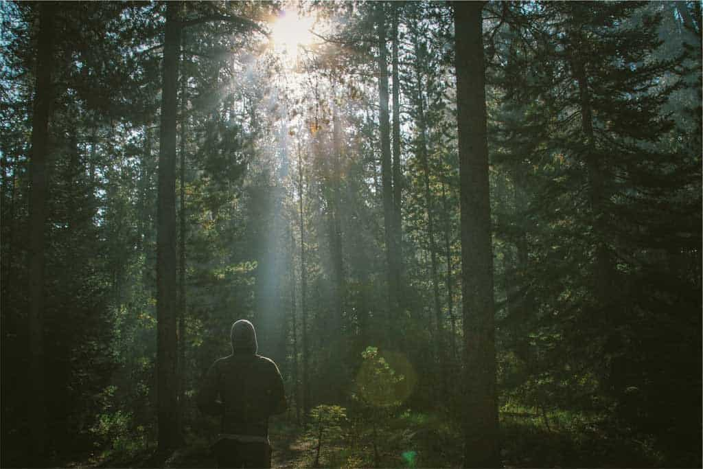 nature_hike_sweater_man_sunlight_blog_ayurveda