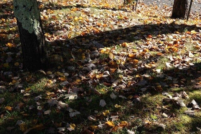 landscape_fall2015_oct2015 10