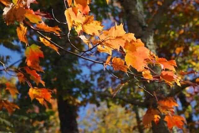 landscape_fall2015_oct2015 2