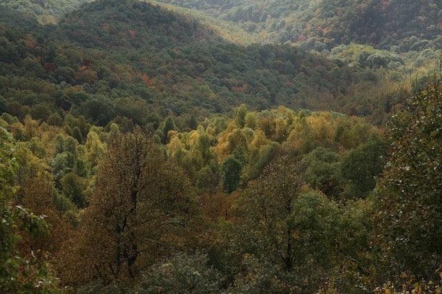 landscape_fall2015_oct2015 3