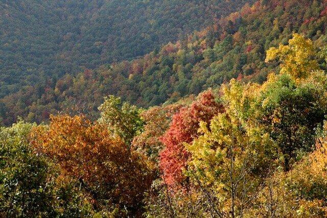 landscape_fall2015_oct2015 5