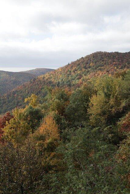 landscape_fall2015_oct2015 6