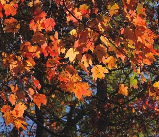 landscape_fall2015_oct2015 8