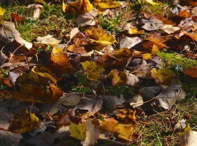 landscape_fall2015_oct2015 9