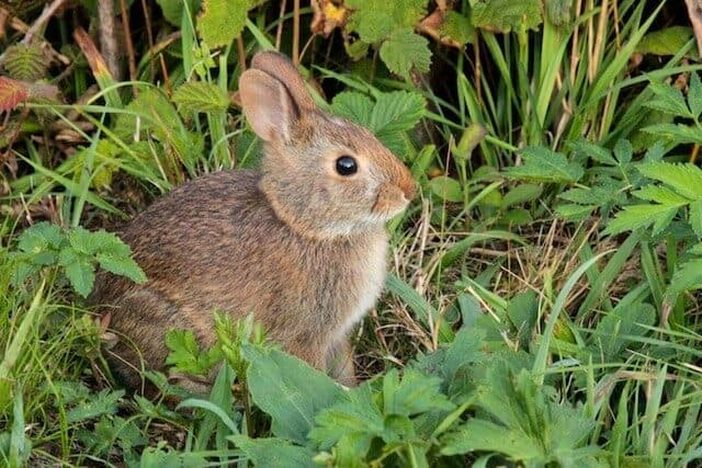 nature_bunny-rabbit