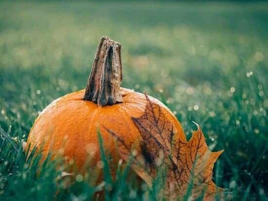 Pumpkin:fallLeaf