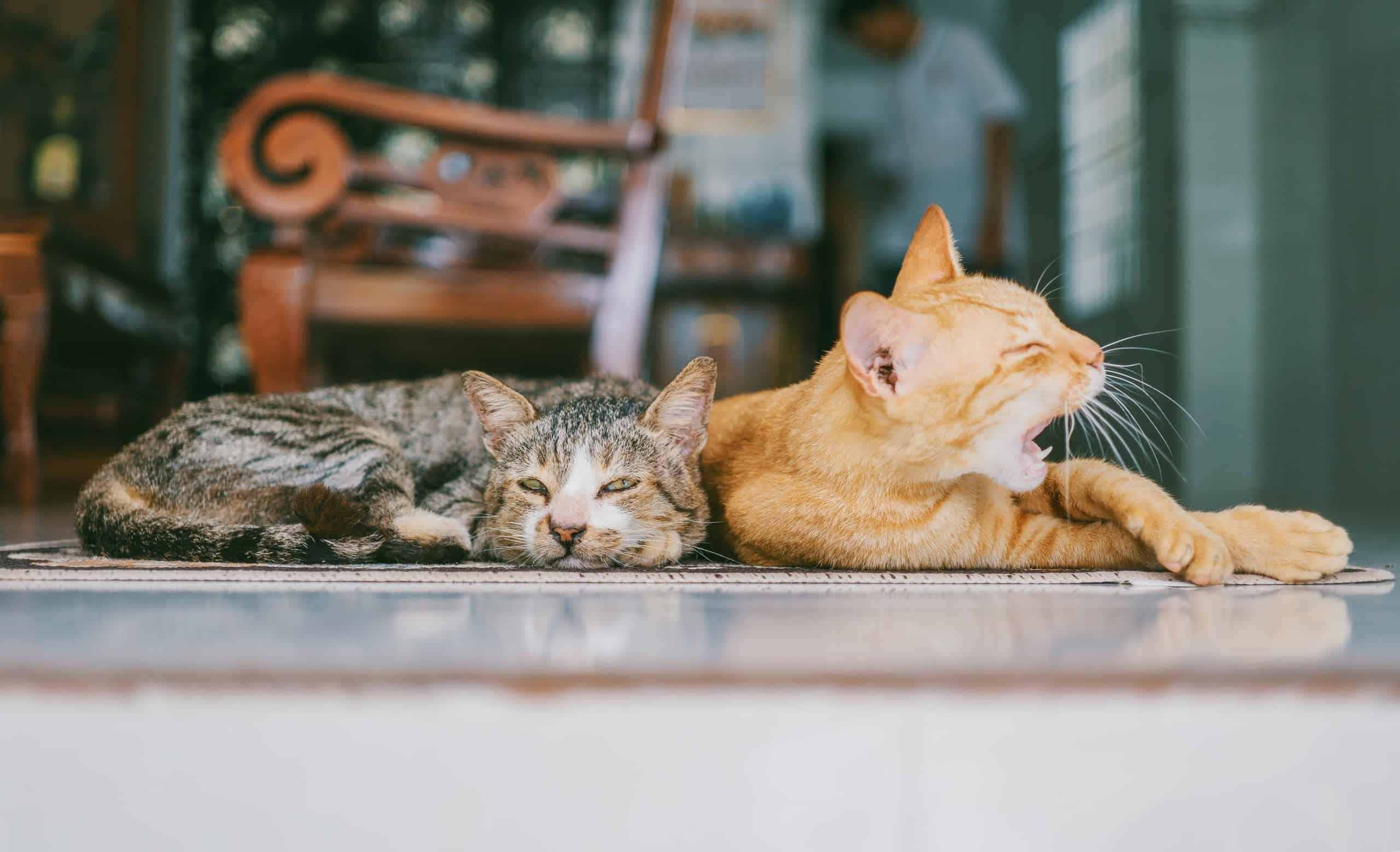 Spiritual Purpose of Pets - The Art of Living Retreat Center