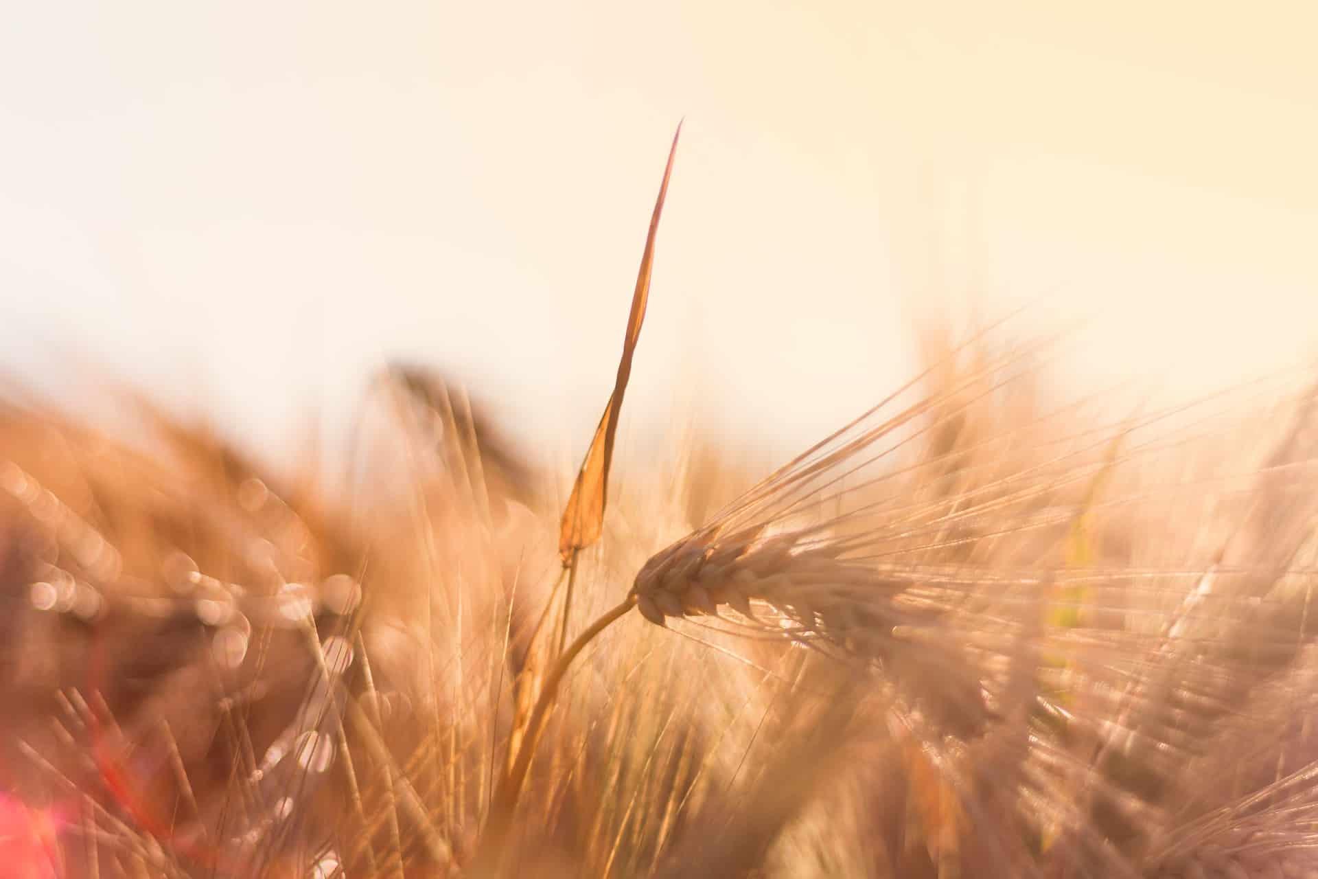 Barley Soup - the Art of Living Retreat Center