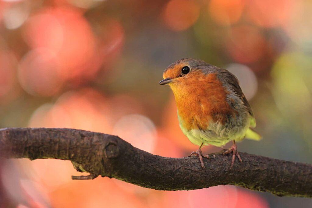 Robin on branch